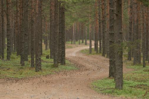 naturewayfinding1